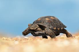 schildpad 5